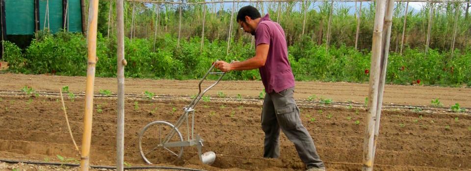 Ferran Coronado, pagès agroecològic